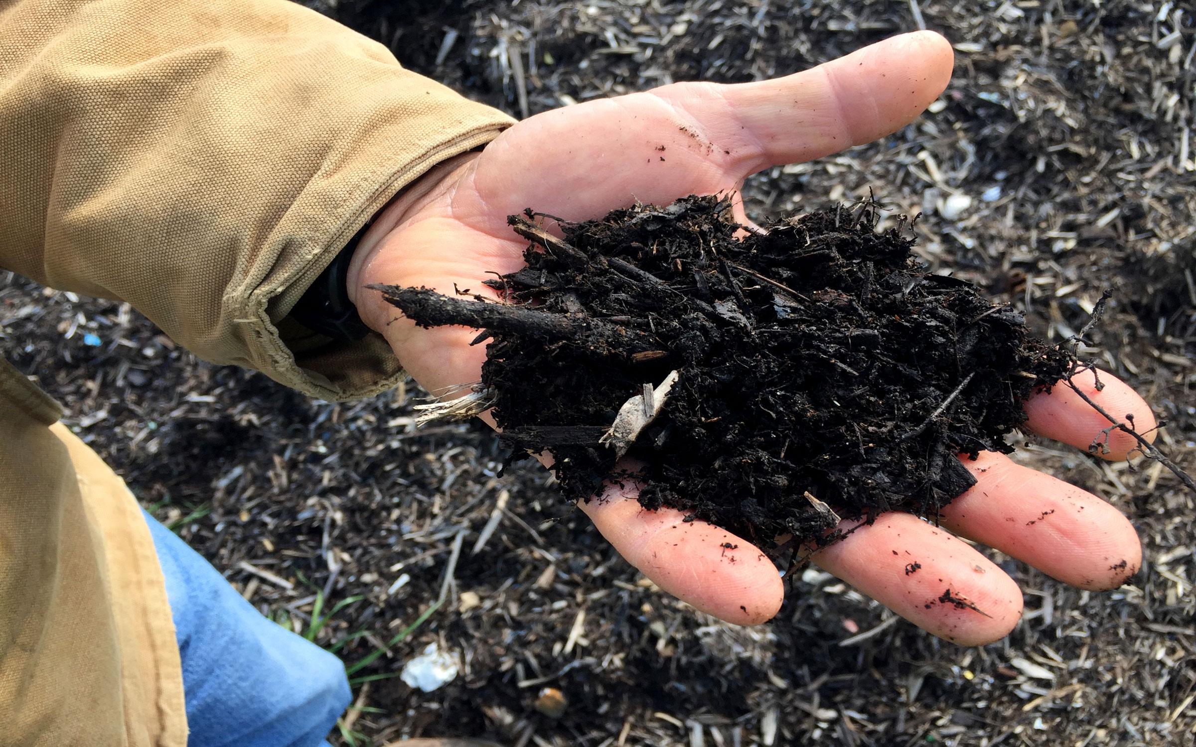 Une seule main tient une grappe de terre sombre et humide.
