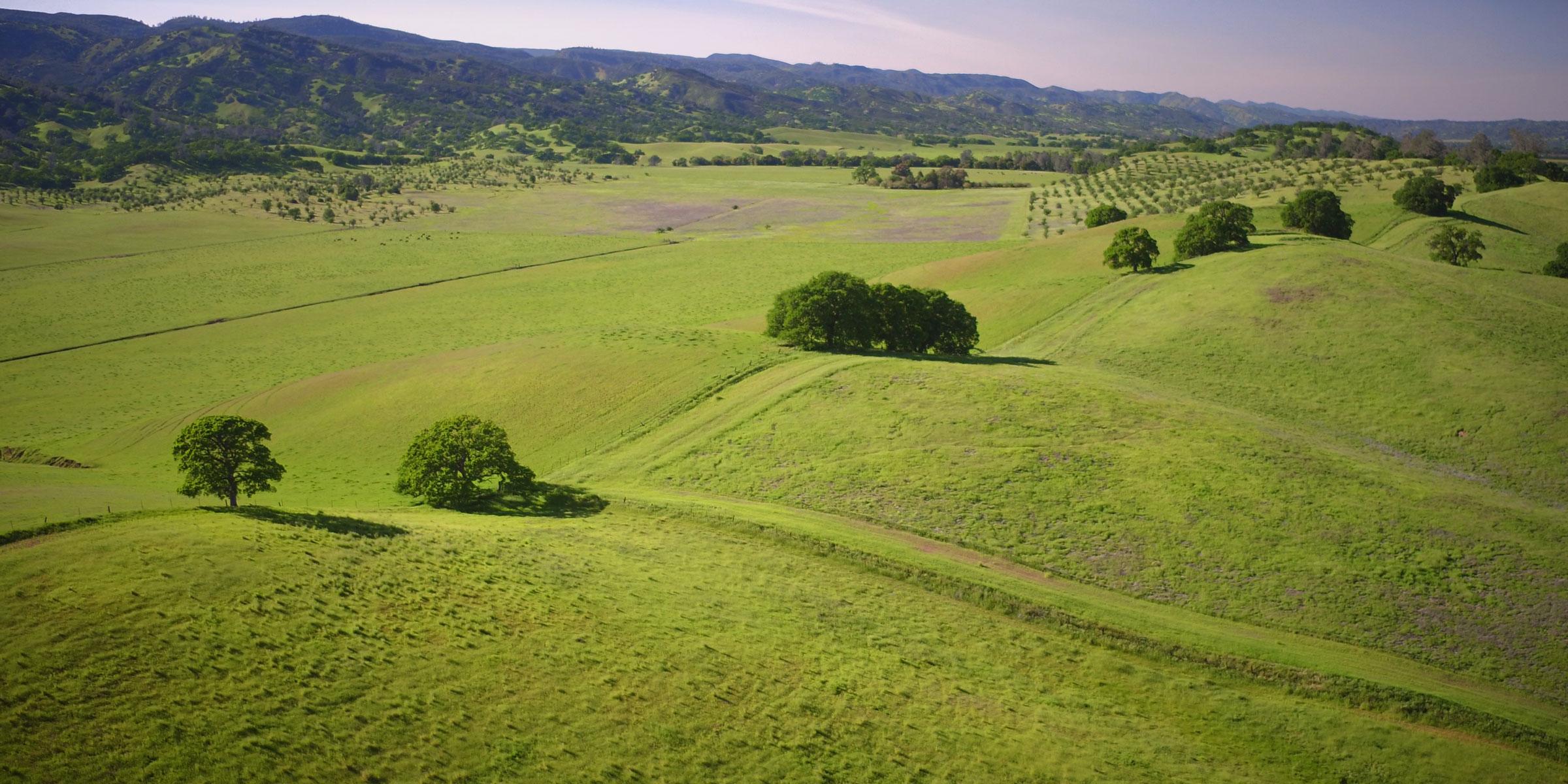 Collines verdoyantes parsemées d'arbres verts luxuriants dans le nord de la Californie